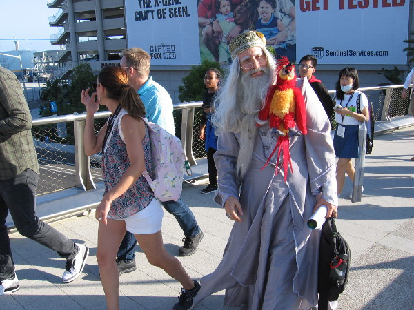 An awesome Dumbledore cosplay!
