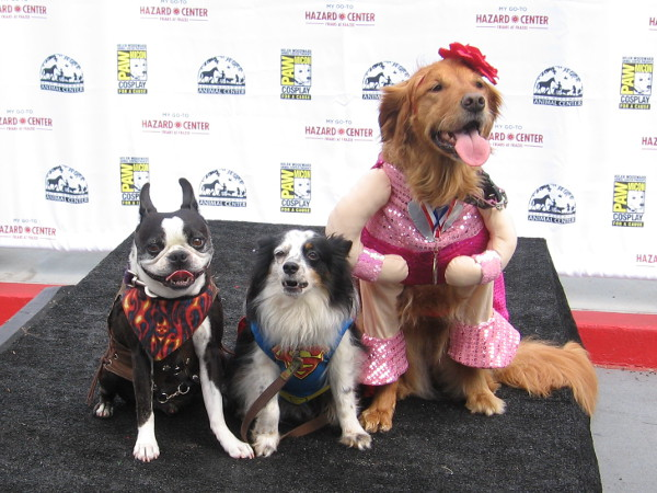 Three canine superstars get their photo during PAWmicon. Cosplay goes to the dogs.