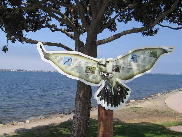A sign in Chula Vista Bayfront Park describes the osprey, a majestic raptor.
