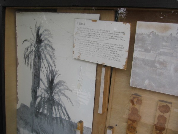 Palms grow. Some words fade.