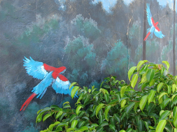 One wall has a mural with a couple of surprises flying behind a bush--parrots!
