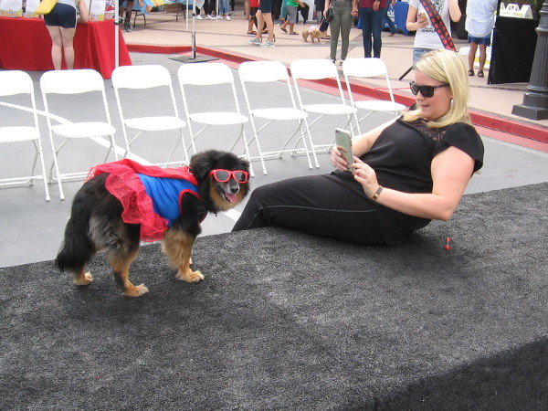 A cosplay dog is a star of the show.