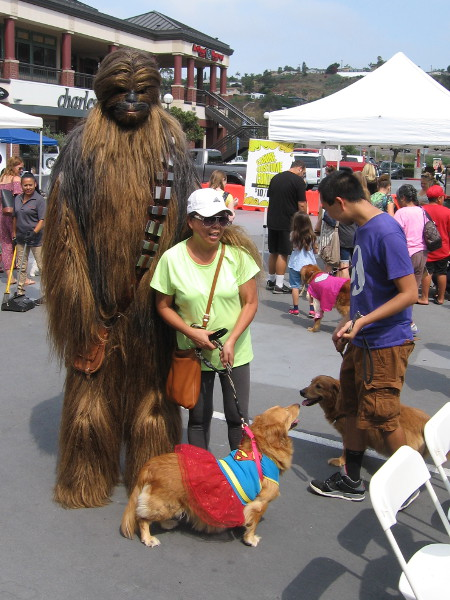 The furriest critter around wasn't a pooch--it was Chewbacca!