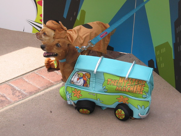 Here comes Scooby Doo. He ate so many Scooby snacks, he outgrew the Mystery Machine!