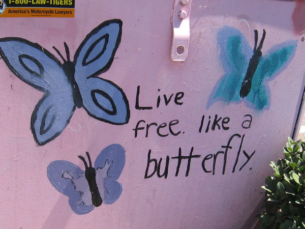 Live free like a butterfly. Street art in La Mesa.