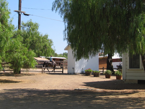 I spotted someone riding a horse past the ranch house. Los Peñasquitos Canyon Preserve is an ideal place for those who love to ride down peaceful trails.