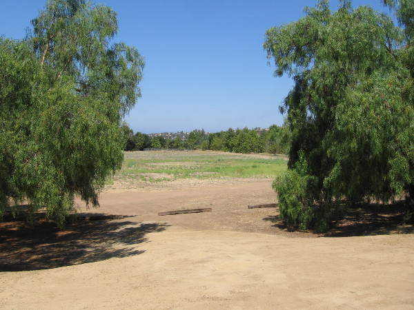 Looking west at a meadow north of Peñasquitos Creek. I posted photos of those sycamores in the distance a few weeks ago.