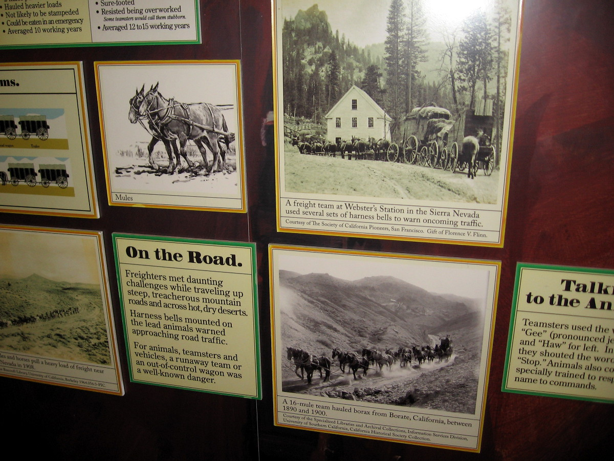 Signs and old photos concerning freight wagons in the Old West, which often employed large teams of mules.