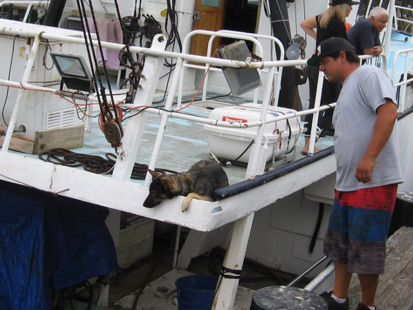 A curious dog on deck watches the action!