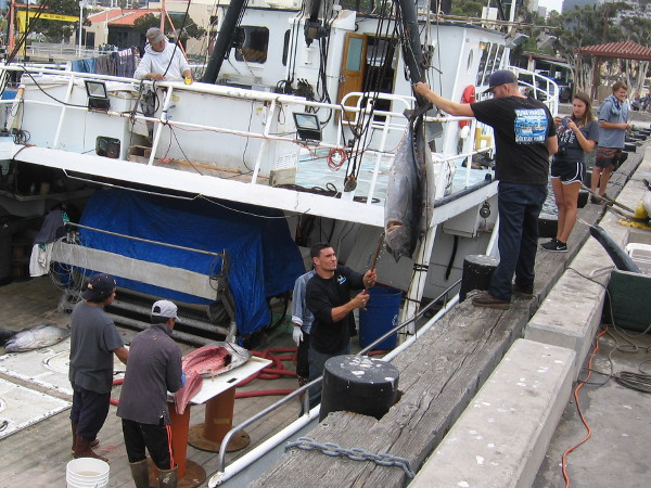The guys are now filleting bigeye tuna, which were caught along with the opah. More bigeye tuna are being hoisted onto the pier!