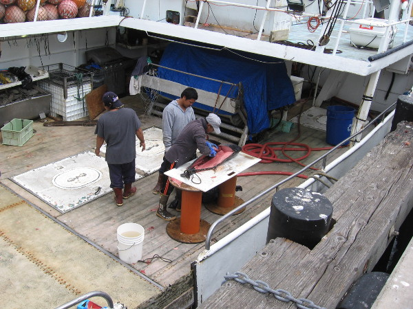 Working hard to prepare your tasty seafood meal!