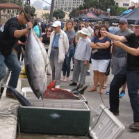 Huge catch of fish arrives in San Diego!