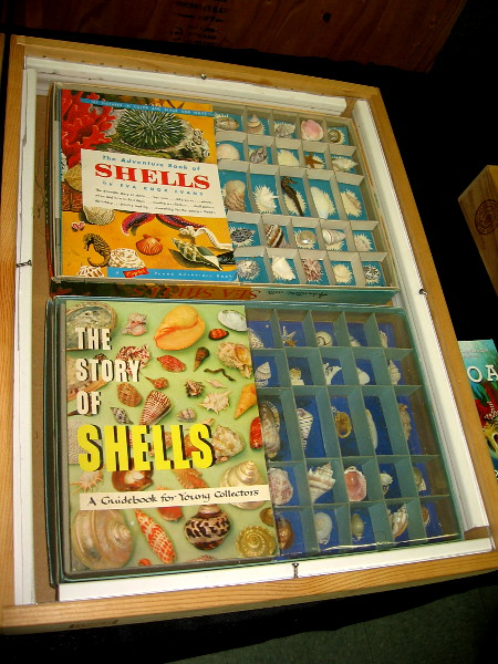 The story of shells appears to have many chapters and subplots.