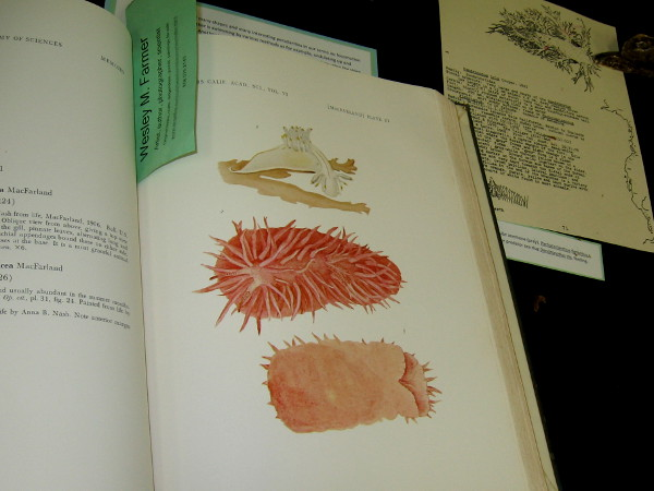 Dr. Wesley M. Farmer had a table full of scientific books, plus lots of unique art he'd created concerning nudibranchs, a type of sea slug. They shed their shells after their larval stage.
