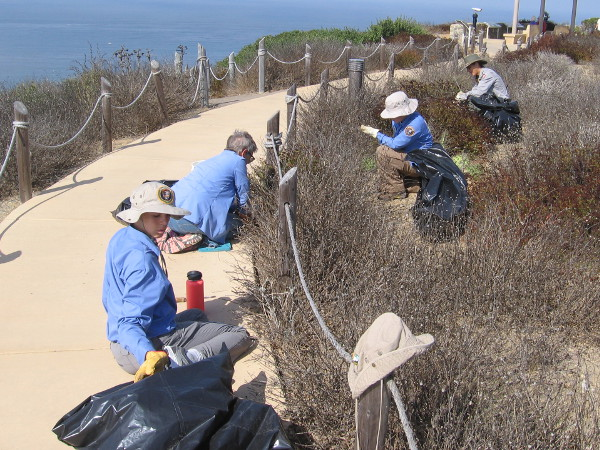 A park ranger and volunteers were removing non-native plants. Invasive species can crowd out native species.