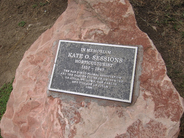 Will seeds planted in Balboa Park by Kate Sessions outlive us all?