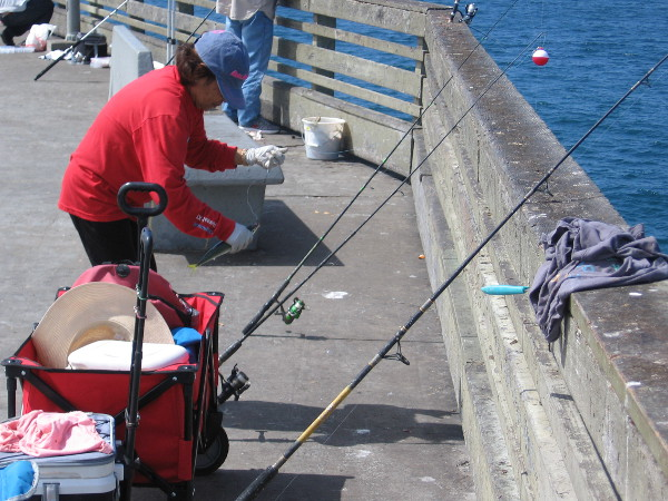 This guy caught a silvery mackerel. They were really biting today along the entire length of the pier.