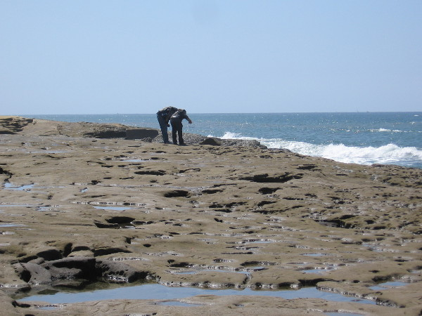 People enjoy looking into small tide pools in the eroded sandstone. I occasionally saw some crabs.