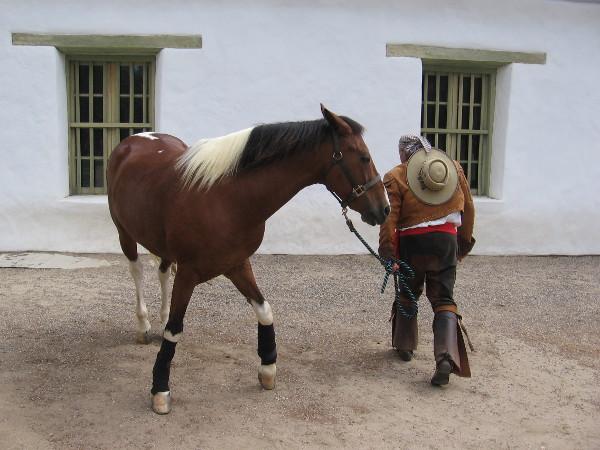 A friendly horse came for a visit as I took some photos outside the Casa de Estudillo during Fiestas Patrias.