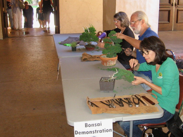 Demonstrations were part of the event. These friendly people were patiently working on their bonsai trees and explaining the process.