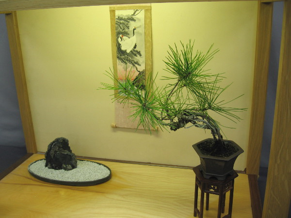 A tiny Japanese black pine is one object in a small room-like scene.