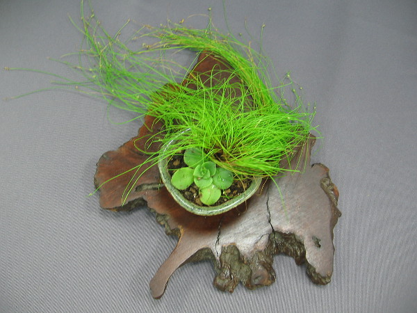 A fine work of art created by a lover of bonsai.