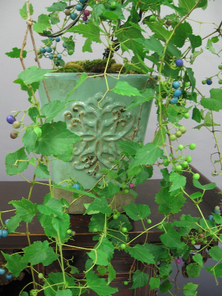 An ornamental porcelain berry arranged in an beautiful pot.