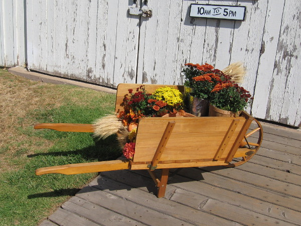 A flower-filled wheelbarrow in front of Seeley Stable.