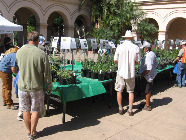 People check potted greenery during the California Native Plant Society's Fall Plant Sale in Balboa Park.