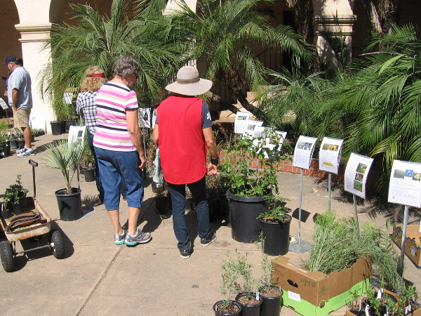 Many plants and flowers native to the San Diego region were for sale in the outdoor courtyard of the Casa del Prado.