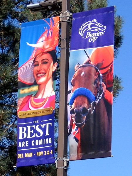 Banner proclaims that The Best Are Coming. The Breeders' Cup will be held at the Del Mar Racetrack in 2017, November 3-4.