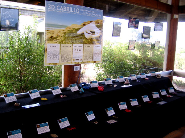 Many colorfully painted 3D printed models of intertidal organisms are on display inside the Visitor Center.