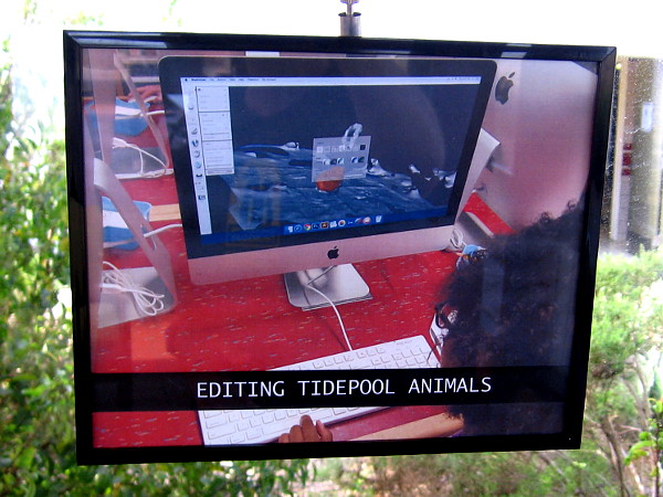 A video explains the 3D printing process, including editing the tidepool animals.