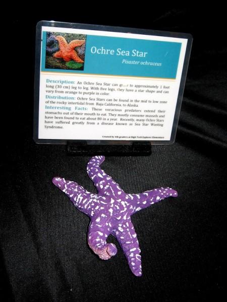 3D printed Ochre Sea Star.