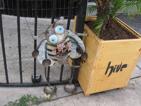 A silly bee made of a potted plant and old metal stuff by the Hive Sushi Lounge on Golden Hill.