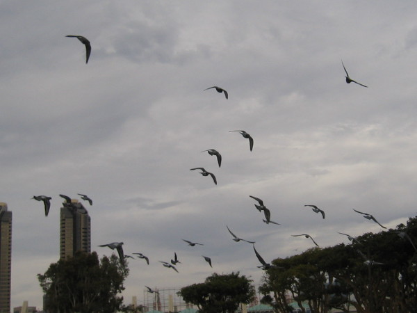 Pigeons swoop in endless searching circles, before settling somewhere far away.