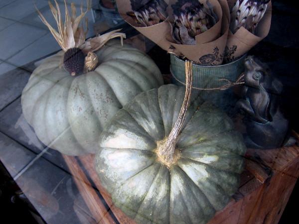 Elegant pumpkins in a Little Italy shop window.