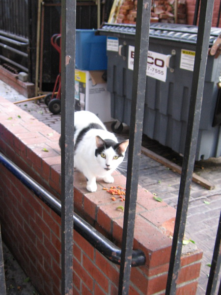 Don't interrupt my breakfast! One of the many cats at the William Heath Davis House in the Gaslamp.