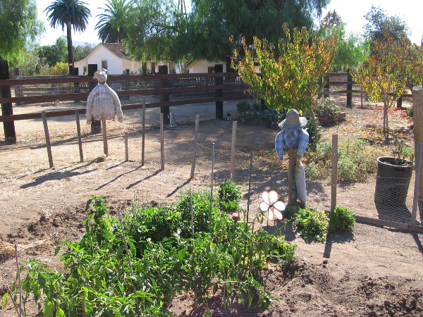 Scarecrows stand guard inside a community garden near the simple farmhouse.