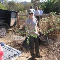 Volunteers restore habitat in San Dieguito River Valley!