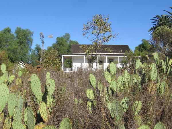 Looking from the nearby trail past prickly pears at the farmhouse.