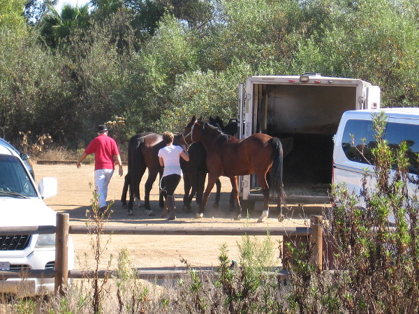 Some horses have arrived at the trailhead's dirt parking lot.
