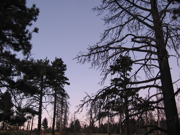 Trees west of the Storm Canyon Overlook are still a bit dark before sunrise.