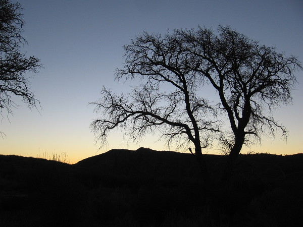 I've started toward the Pacific Crest Trail from the Penny Pines trailhead. The eastern sky is slowly brightening.