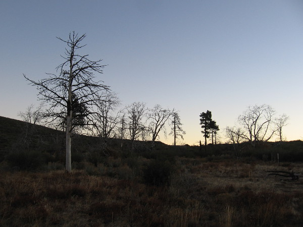 A chilly early November morning in the Cleveland National Forest near the top of Mount Laguna.