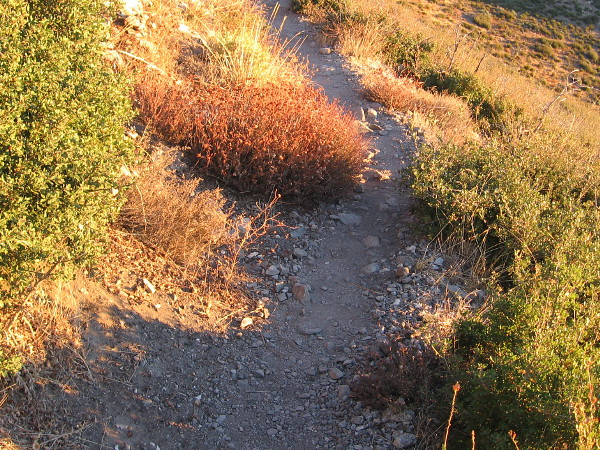 Sudden morning light brightens vegetation near the trail.