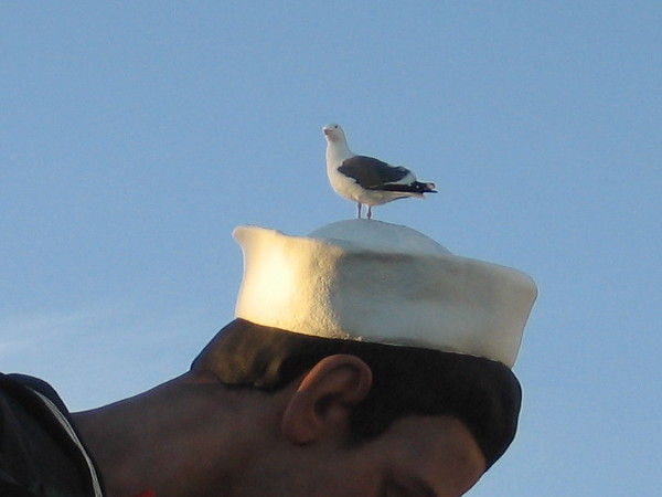 A miniature seagull on the hat of a Navy sailor! Or perhaps it's just a bird atop Seward Johnson's enormous Embracing Peace statue on the Embarcadero. (The sailor-kissing-nurse-at-end-of-war sculpture was originally titled Unconditional Surrender.)