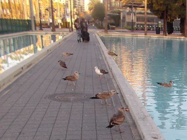 Gulls enjoy a beautiful morning in the city.