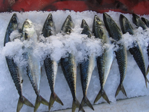 Fresh locally caught fish on ice for sale at San Diego's Tuna Harbor Dockside Market.