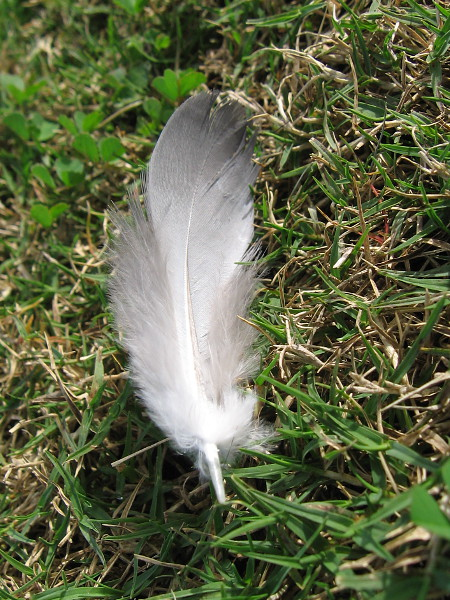 A beautiful feather and I meet for a moment.